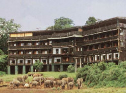 The Serena Mountain Lodge
